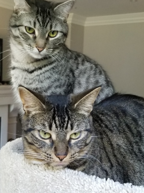 An image of two cats