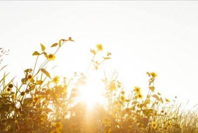 Sunburst through flowers: photo